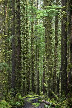 Olympic National Park, Washington State  I live in Washington and still have a thousand places I want to see