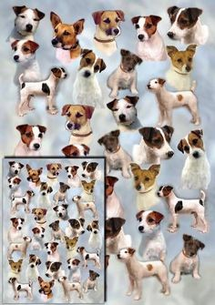 Parson-Jack-Russell-Terrier-Wrapping-Paper-Starprint