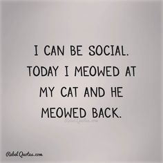 I can be social today I meowed at the cat an he meowed back.  #rebelgirl #rebel