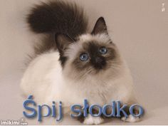Wierszyki i gify na dobranoc: Gify na dobranoc kotki Humor, Pets, Animals, Model, Dog Love, Animals And Pets, Animales, Humour, Animaux