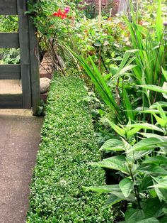 One edge of the Triangle Border at the back of the house. Nice and neat with plants tumbling over.