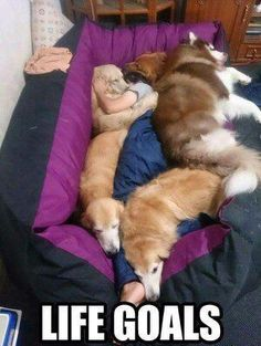 This is my idea of a wonderful and loving relationship between animals and children.  I only pray that all children are thought that pets are to be LOVED and not harmed or mistreated in any way.