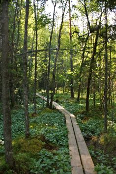 Nuuksio National Park in Espoo