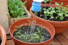 Watering tiny plants Greenery, Plants, House, Home, Haus, Planters, Plant, Houses, Planting