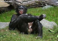 Naughty Funny Monkey Having Fun