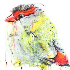 Meaghan Potter, Lines Between Recognising (Red Bower Finch) III  , 2017, Watercolour, Ink and Conte Charcoal on Arches 300gsm Watercolour paper, 100 x 100 cm, .M Contemporary, Art Gallery, 37 Ocean St, Woollahra, NSW, enquire at gallery@mcontemp.com