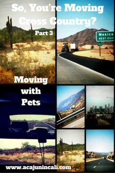 Are you moving cross country with pets? Get the best tips for moving with pets plus tons of other helpful moving tips in the moving cross country moving series. Road Trip Map, Road Trip Destinations, Road Trips, Moving Day, Moving Tips, Moving Across Country Tips, Moving Hacks, Moving To Florida, Moving To Texas