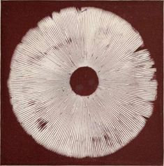 evadirse:Spore print of Amanita Muscaria Mushroom Spores, Mushroom Art, Nature Prints, Art Prints, Logo Creation, Flowers Nature, Fungi, Printmaking, Art Projects
