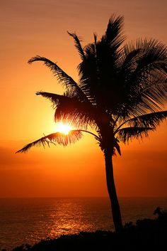 Sunset behind a palm tree