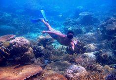 snorkeling, At Karimunjawa, Indonesia