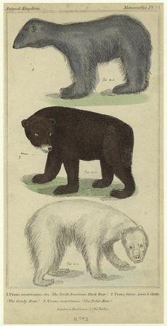 Bears! :)