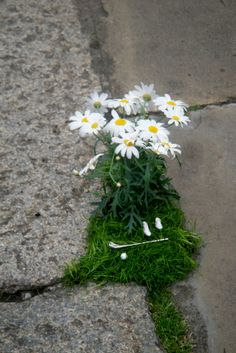 London Potholes Transformed into Incredible, Tiny Gardens
