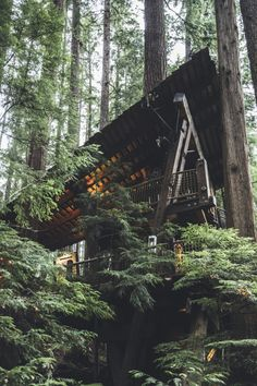 ~ tree house