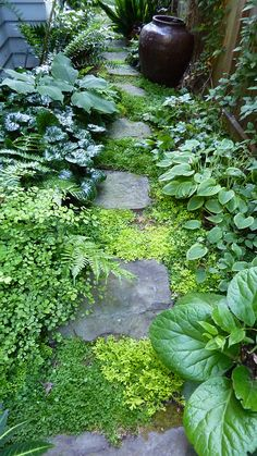 Portland Oregon Garden Tour | Darcy Daniels' garden. | Flickr - Photo Sharing!