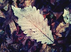 vintage fall leaves--These colors are so pretty!