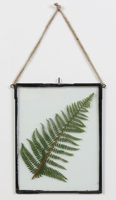 Grab a fern from the garden and pop it into an antique glass frame. Pressed Flower Art, Diy Décoration, Leaf Art, Home And Deco, Botanical Prints, Decoration, Home And Living, Interior Inspiration, Home Accessories