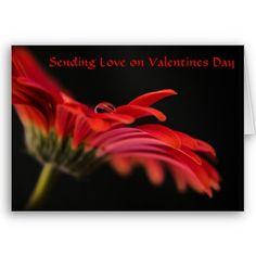 Red Macro Gerbera Flower Valentines day Greeting Card $3.35