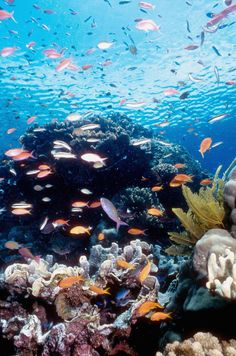 The Great Barrier Reef. One place I want to go to when I go back to Australia some day again. It looks beautiful.
