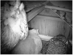 Live Chicken Cam (in Auburn CA) ~ night vision ~ Chicken Coop Kit, Building A Chicken Coop, Pictures Of Chicken Coops, Chicken Watering System, Automatic Chicken Coop Door, Live Chicken, Frostings, Night Vision, Auburn