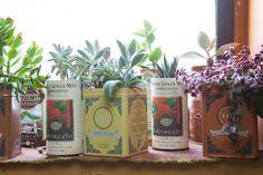 Deze vrouw is dol op planten, maar helaas heeft ze geen tuin. Daarom heeft ze haar appartementje vol gezet met maar liefst 500 planten.