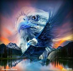 Native American Pictures, Native American Artwork, Native American Indians, Native Americans, Eagle Wallpaper, Lion Wall Art, Owl Artwork, Eagle Pictures, Eagle Art