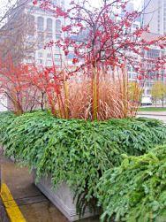 Lurie-Garden-Chicago-fioriere-autunnali