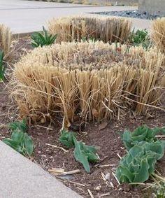 Grass Maintenance  don't cut back your grasses until spring!