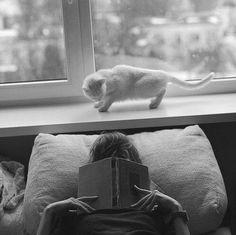 Para mantener una verdadera perspectiva de lo que valemos todos deberíamos tener un perro que nos adore y un gato que nos ignore.  Derek Bruce #CulturaColectivaLetras #gatosylibros #catlover #booklover #cat #bookworm #PinCCLetras #CulturaColectiva