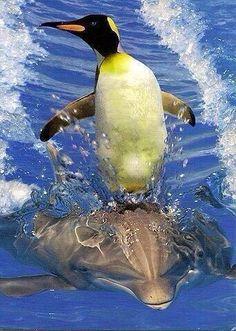 Pinguin en dolfijn, samen spetteren!