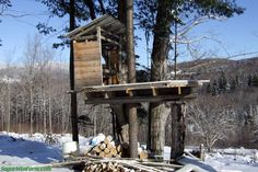 Tree House Time | Sugar Mountain Farm