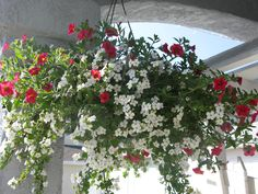 the overflowing hanging basket