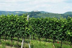 Expo Veneto: Discover our wines and our territory! - Events