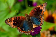 Flying Divas.  (c) ivan b. carmo (Ivanbcarmo)