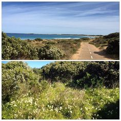 Beautiful morning for a ride and the perfume from the wild freesias along the track confirmed that spring is in the air. #spring#springflowers#bluesky#sunshine#warrnambool#cycling#destinationwarrnambool#visitwarrnambool#3280 by janichol50