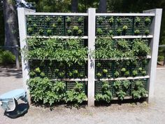 Save space with a tall garden.  Grow small vegetables like lettuce, herbs, strawberries. Face south.