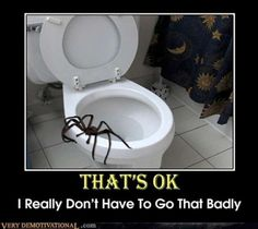 Spider on side of toilet bowl, Nope that's OK I really don't have to go that badly, generally they're just annoyingly scary.