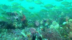 Diving at Bellbuoy Reef