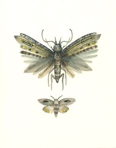 Amber Alexander Moths No. 3 print of Watercolor Painting, natural history art