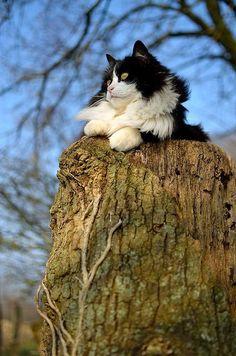Херсонская кошка. Kherson. Ukraine. Tourism. South. Cat. Cats. Courtyard. City. Animals.