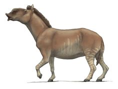 Hippidion is an extinct genus of horse that lived in South America during the Pleistocene epoch, between two million and 10,000 years ago. Hippidion has been considered a descendant of pliohippines, horses that migrated into the South American continent around 2.5 million years ago. However, recent analysis of the DNA of Hippidion and other New World Pleistocene horses supports the novel hypothesis that Hippidion has a particularly close relationship to the wild horse, Equus ferus.