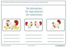 Ficha de las funciones vitales para primaria