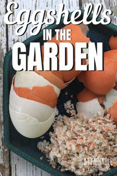 Using eggshells in the garden can improve your harvest and save you a bit of money, too. Give these ideas a try for a no-cost way to a better garden! Gardening For Beginners, Gardening Tips, Diy Garden Projects, Garden Ideas, Egg Shells In Garden, Outdoor Gardens, Veggie Gardens, Vegetable Gardening, Lawn Repair