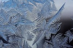Window frost (also called fern frost or ice flowers) forms when a glass pane is exposed to very cold air on the outside and moderately moist air on the inside. #winter