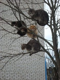 rainbow in your eyes | as-warm-as-choco:   just cats chilling on trees