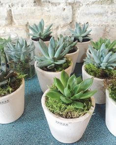These very cute succulents from @qualityplants1988 in their @seraxbelgium pots will be making a star appearance at our #socialforflorists workshop tomorrow! #luckydelegates