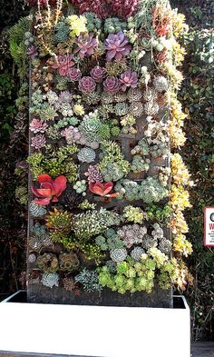 Succulents wall - i need to make this happen one day