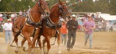 Annual events and festivals like the Smithfield Ham and Yam Festival and Benson Mule Days will keep you coming to Johnston County for fun, games, music, food and more!