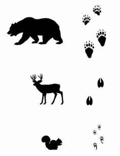 Woodland Animals Theme, Forest Animals, Animals And Pets, Funny Animals, Animal Activities For Kids, Animal Footprints, Animal Tracks, Funny Illustration, Camping Theme