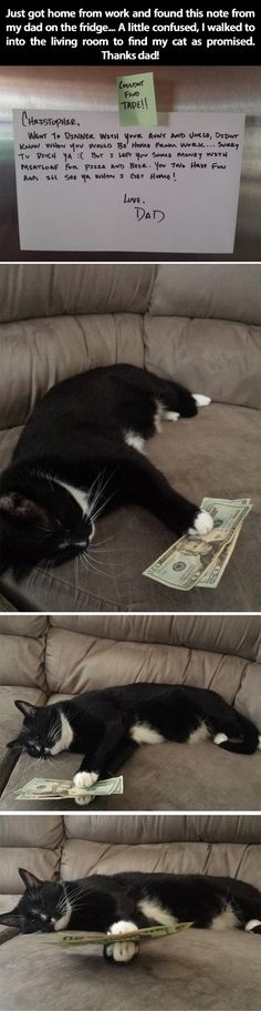 Dad leaves money for dinner with cat.