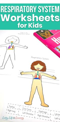 Learn all about the human body and now see how our body gets oxygen with these Respiratory System Worksheets for Kids. Educational and fun! Perfect if you're creating your own human body lessons. Human Body Activities, Fun Activities For Toddlers, Learning Activities, Homeschool Science Curriculum, Teaching Science, Teaching Kids, Human Body Lesson, Physics Lessons, Life Learning